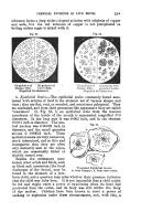 Side 591