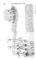 Pagina 454