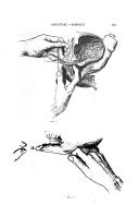 Side 525